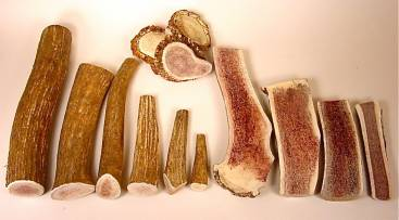 Large Whole Premium Elk Antler Dog Chews -By the Pound-