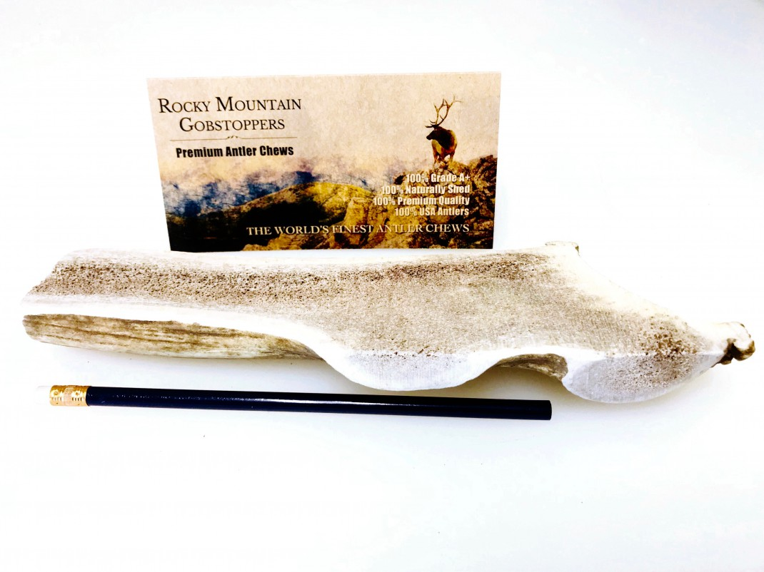 LARGE-SPLIT Rocky Mountian Gobstoppers Premium Elk Antler Dog Chews -( Antlers By-The-Pound)