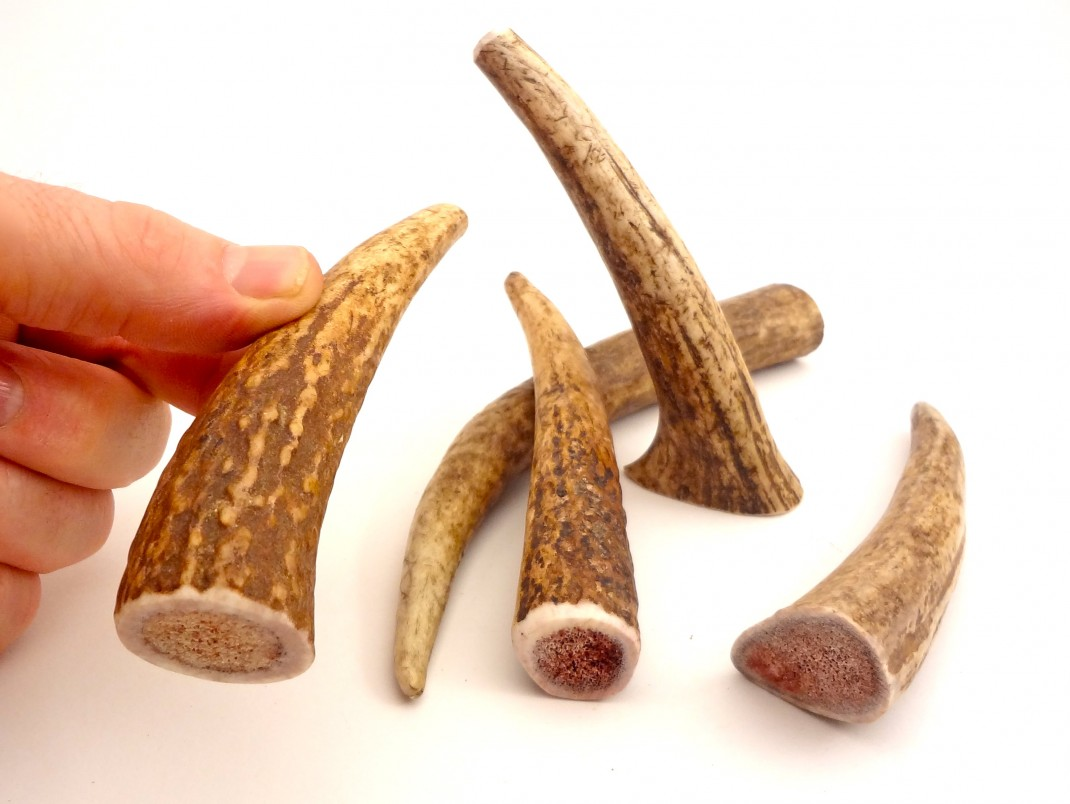 PETITE- WHOLE Rocky Mountain Gobstoppers Premium Elk Antler Dog Chews By-The-Pound